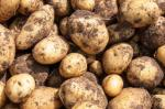 Image for Potatoes - New Cornish SPECIAL OFFER