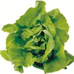 Image for Lettuce