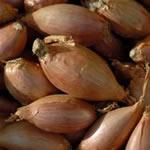 Image for Shallots